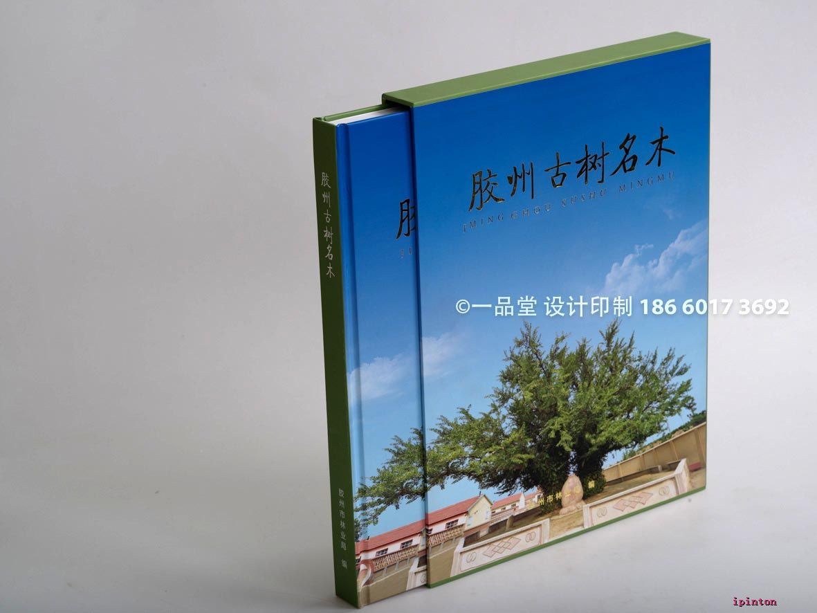 胶州李陆路规划设计图